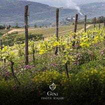 The Wandering Gourmet writes about Tenuta Scajari